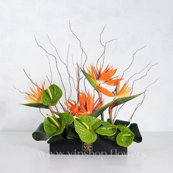 باکس گل مشکی پلکسی آنتوریوم استرلیتزیا - گلفروشی آنلاین VIP Shop