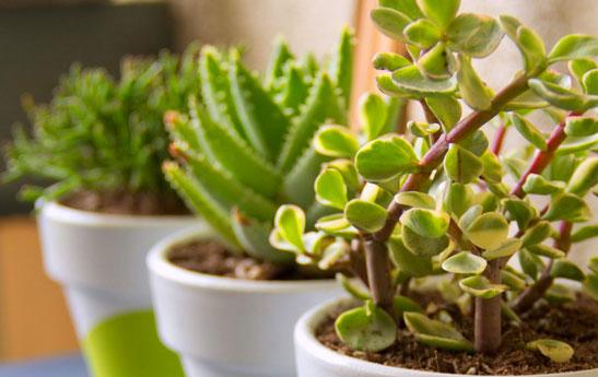 بهترین-نکات-برای-نگهداری-گل-ها-و-گیاهان-خانگی