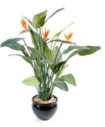 گل مرغ بهشتی