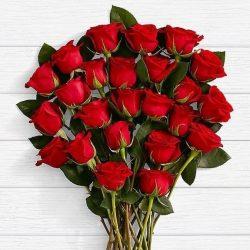گل رز هدیه روز معلم