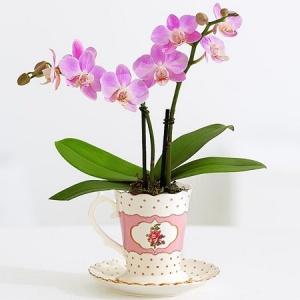 روش خرید و نگهداری گل ارکیده