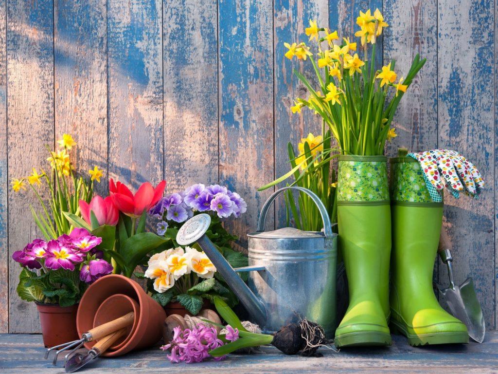 چه گیاهانی برای پرورش در خانه مناسب می باشند؟