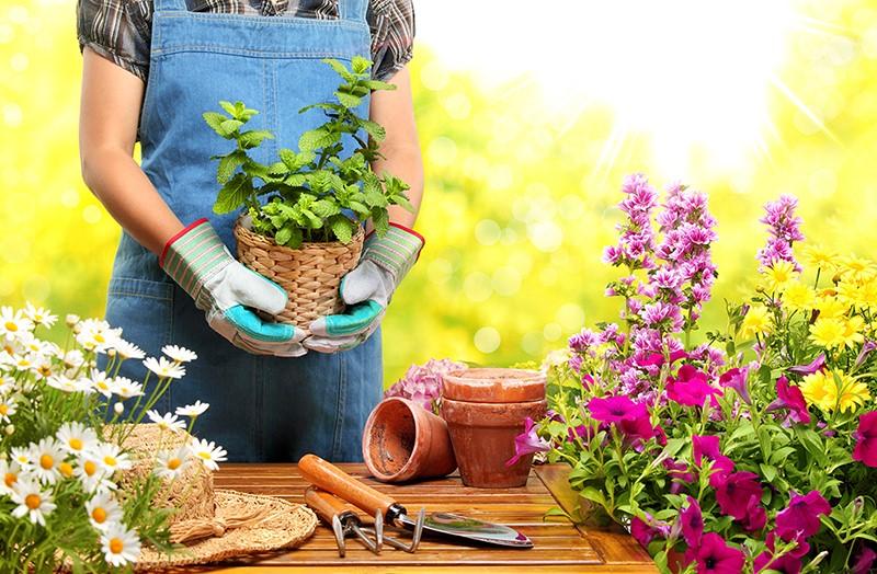 چه گیاهانی برای پرورش و نگهداری در خانه مناسب می باشند؟
