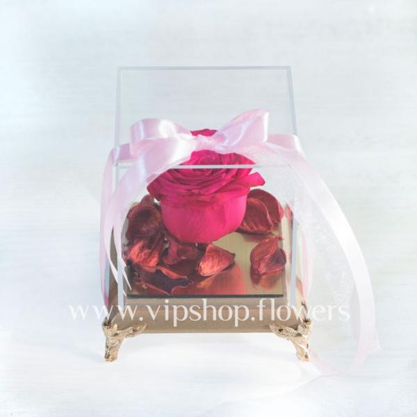 گل رز جاودان شماره 15