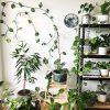 دکوراسیون گل و گیاه