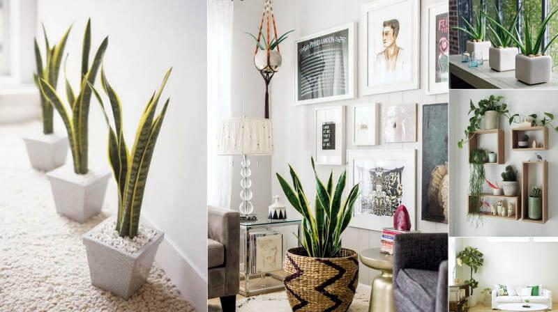 چیدمان گلدان طبیعی در منزل