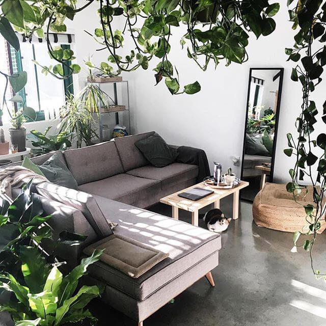 دکوراسیون با گیاه آپارتمانی