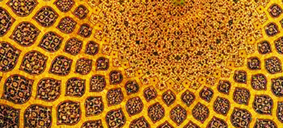 خرید گل در اصفهان