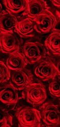 تعبیر خواب گل رز