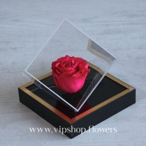 گل رز جاودان شماره 1