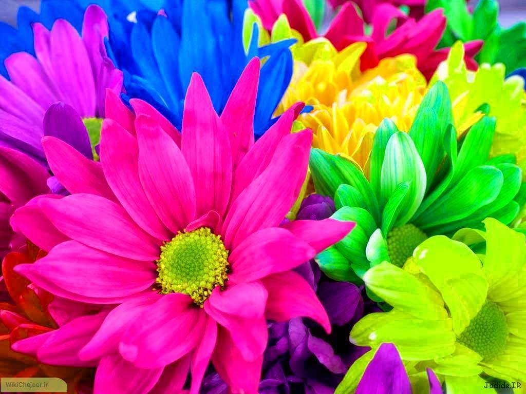 گل های مناسب برای کاشتن در فصل پاییز