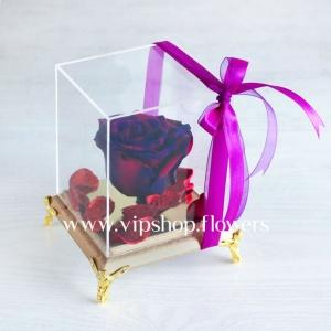 گل رز جاودان شماره 2