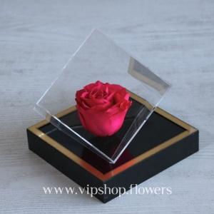 گل رز جاودان شماره 13