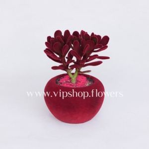 گلدان آپارتمانی کراسولا (کد 022)