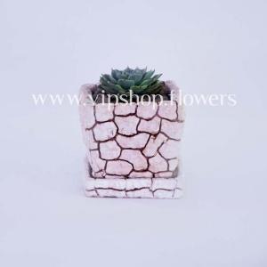 گلدان آپارتمانی ساکولنت خورشیدی (کد 070)