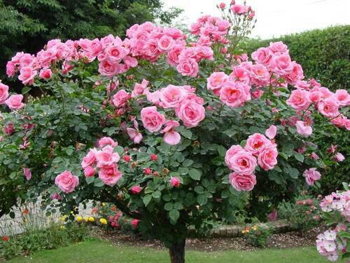 اسامی گل ها با حروف الفبا برای اسم و فامیل