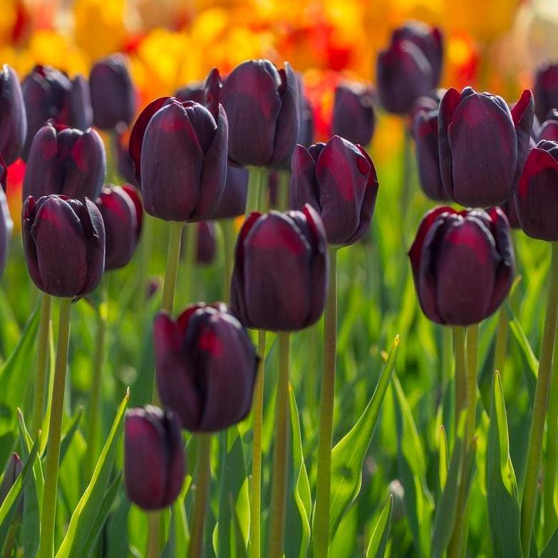 لیست 10 مورد از گران ترین گل های دنیا