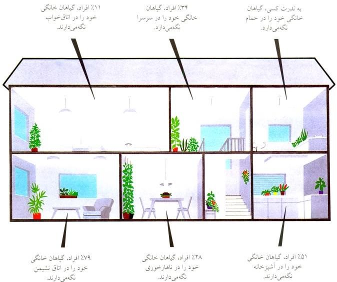 تعیین محل گیاهان در خانه- گلفروشی آنلاین VIP Shop