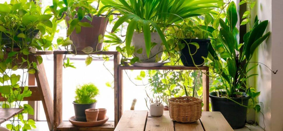 شرایط رشد گیاهان آپارتمانی