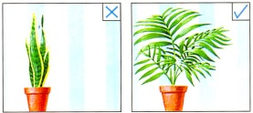 زمینه گیاهان آپارتمانی- گلفروشی آنلاین VIP Shop