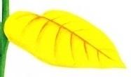 زرد شدن برگها-گلفروشی-آنلاین-VIP-Shop