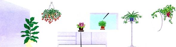قراردادن گیاهان در جاهای متفاوت اتاق- گلفروشی آنلاین VIP Shop