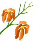 پژمردگی گلها- گلفروشی آنلاین VIP Shop