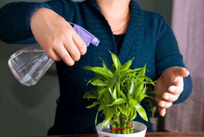 رطوبت مورد نیاز گیاهان- گلفروشی VIP Shop