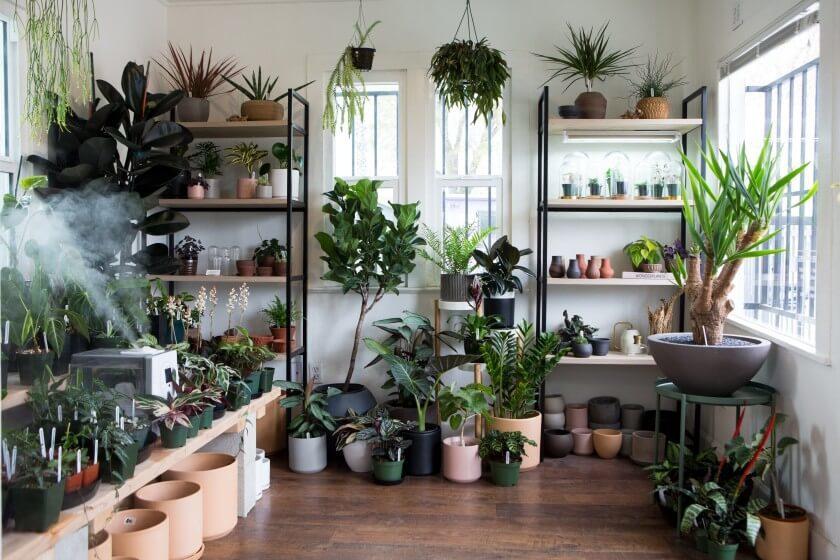 هنر ارائه گیاهان آپارتمانی- گلفروشی آنلاین VIP Shop