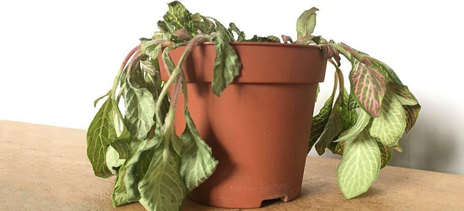 بیماری گیاهان آپارتمانی و پیشگیری از آن