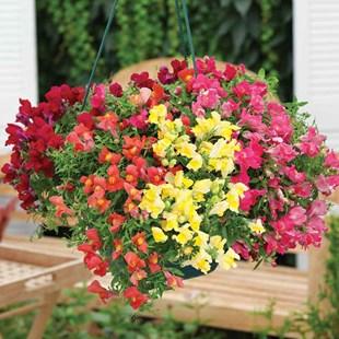 آشنایی با گلهای مناسب فصل بهار و تابستان (بخش دوم)