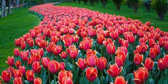 نکاتی کلیدی و کاربردی برای علاقه مندان به خرید گل آپارتمانی- گلفروشی آنلاین VIP Shop