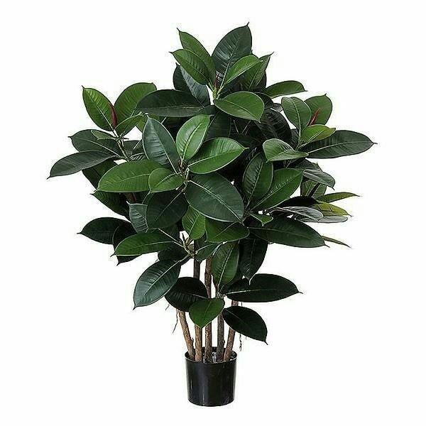 چند تا از دلایل زردشدن برگ گل مخصوص آپارتمان چیست ؟- گلفروشی آنلاین VIP Shop