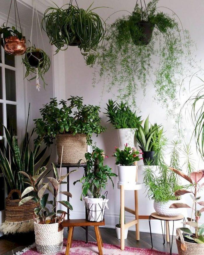 چهار مورد از استفاده گیاهان آپارتمانی در دکوراسیون منازل- گلفروشی آنلاین VIP Shop