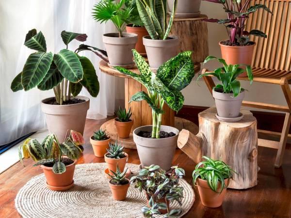 چه گیاهان آپارتمانی برای هدیه دادن مناسب تر هستند؟