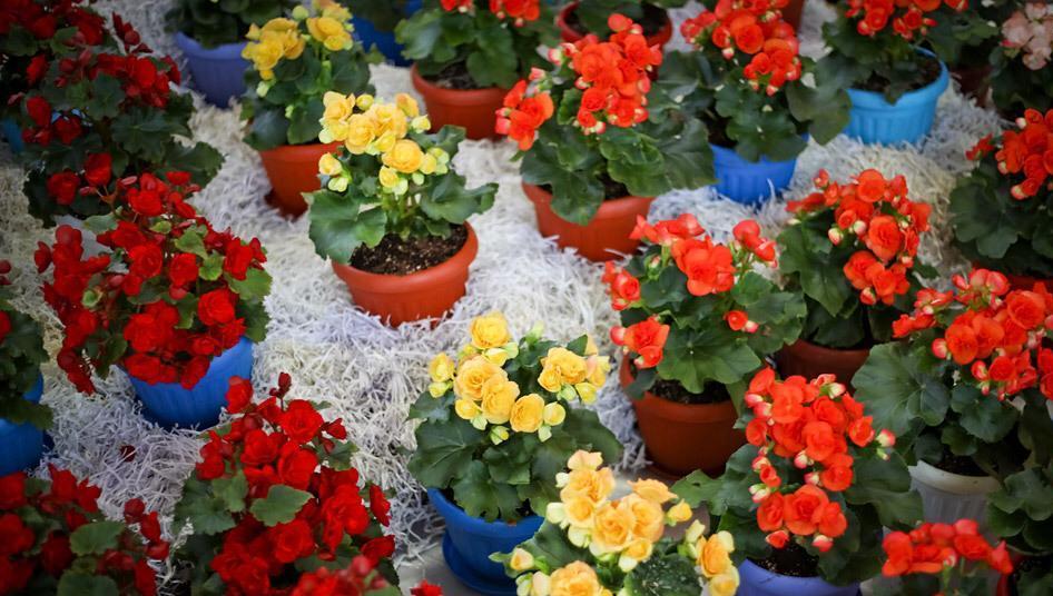 گلهای مناسب فصل بهار و تابستان - گلفروشی آنلاین VIP shop