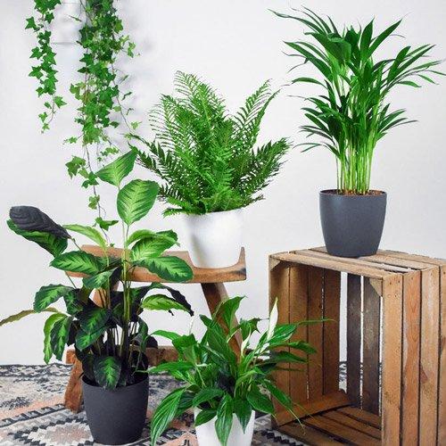 گیاهان آپارتمانی با نگهداری آسان؛ سندروم ساختمانی چیست؟