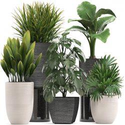 گیاهان آپارتمانی مقاوم- گلفروشی آنلاین VIP Shop