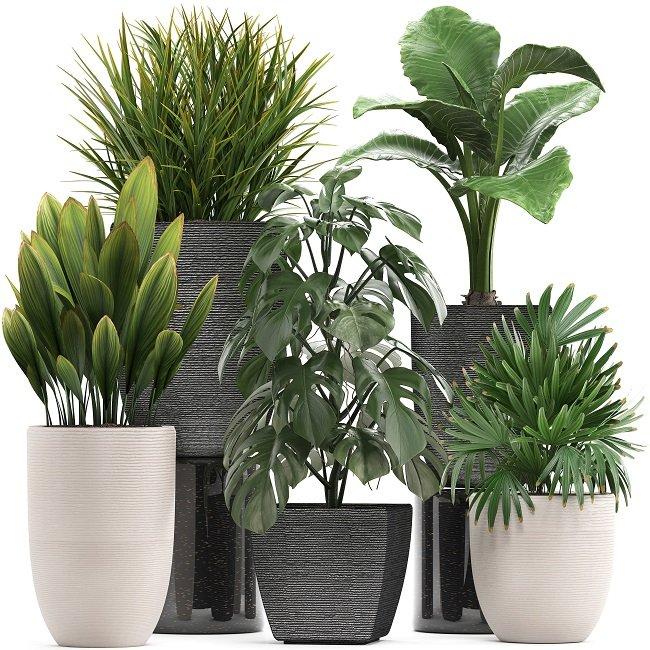 گیاهان آپارتمانی مقاوم به نور کم و سایه دوست