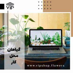 گیاهان محل کار - www.vipshop.flowers