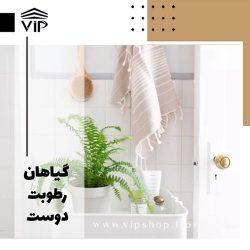 گیاهان رطوبت دوست برای حمام و دستشویی-vip