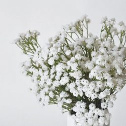 گل عروس (ژیپسوفیلیا) - گلفروشی آنلاین VIP Shop