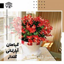 گیاهان آپارتمانی گلدار VIP