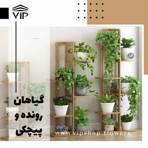 گیاهان رونده و پیچکی - www.vipsshop.flowers