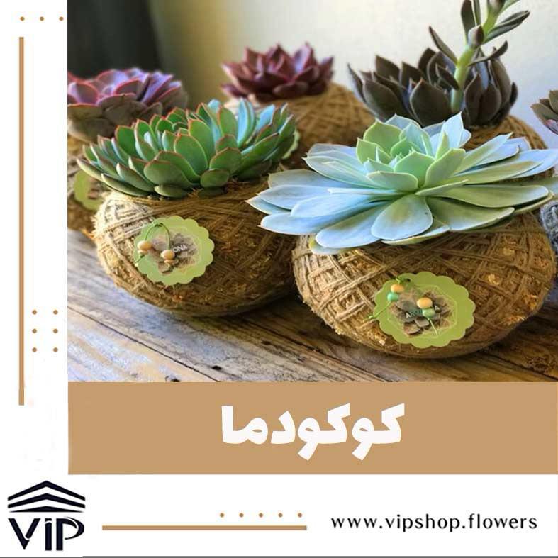 گیاه رونده کوکودما -VIP