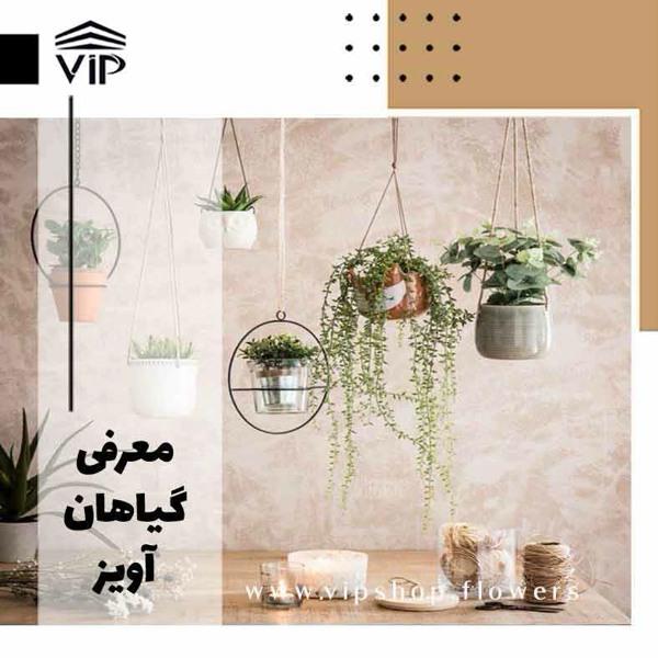 گیاهان آویز - vip shop