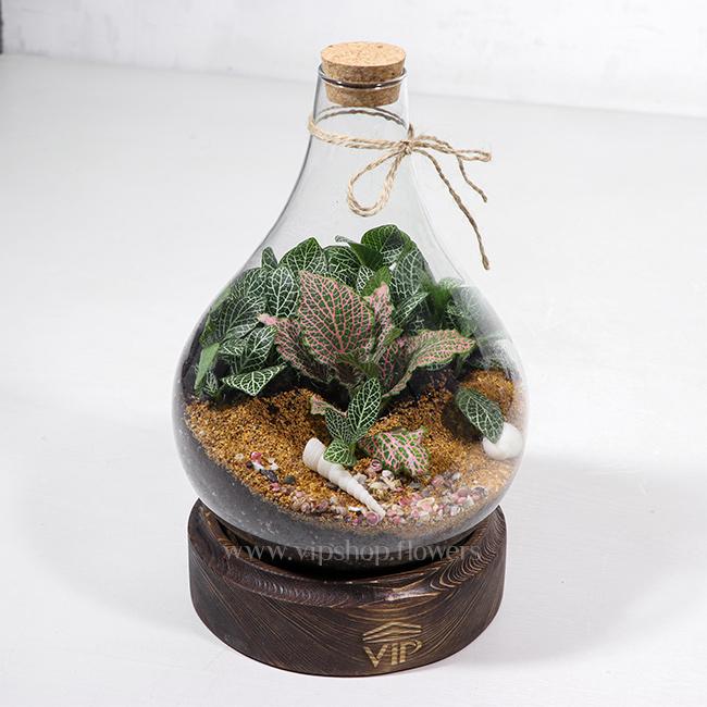 گیاه تراریوم شماره 2 - گلفروشی آنلاین VIP Shop