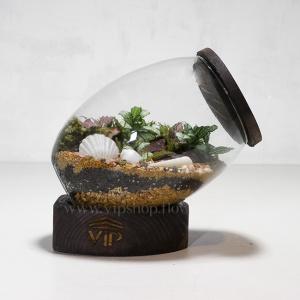 گیاه تراریوم شماره 3- گلفروشی آنلاین VIP Shop