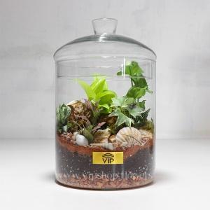گیاه تراریوم شماره 4- گلفروشی آنلاین VIP Shop
