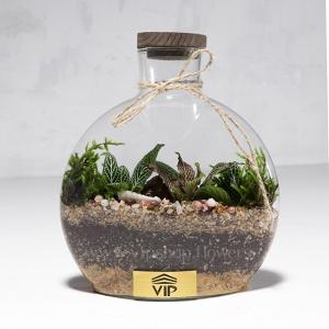 گیاه تراریوم شماره 5- گلفروشی آنلاین VIP Shop